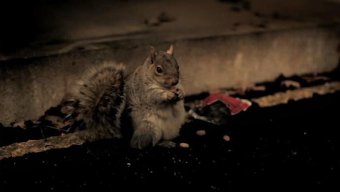 Nolan's Nuts by John Nolan