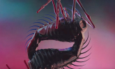 The Horrors 'Machine' by Jon Emmony