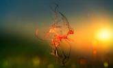 Tennyson 'L'oiseau qui danse' by Jean-Marie Marbach