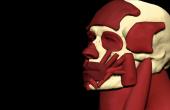 Damon Albarn 'Everyday Robots' by Aitor Throup
